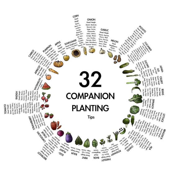 companion planting resized 600