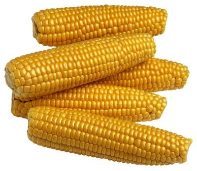 Corn resized 600