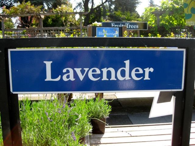 Lavender sign