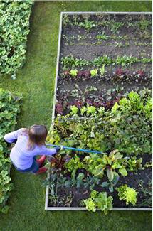 Growing Greens is Easy!