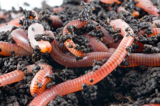 worm farm resized 600