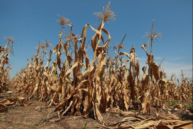 Drought%20Corn