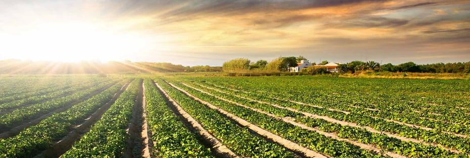 banner-crops-sunset-1.jpg