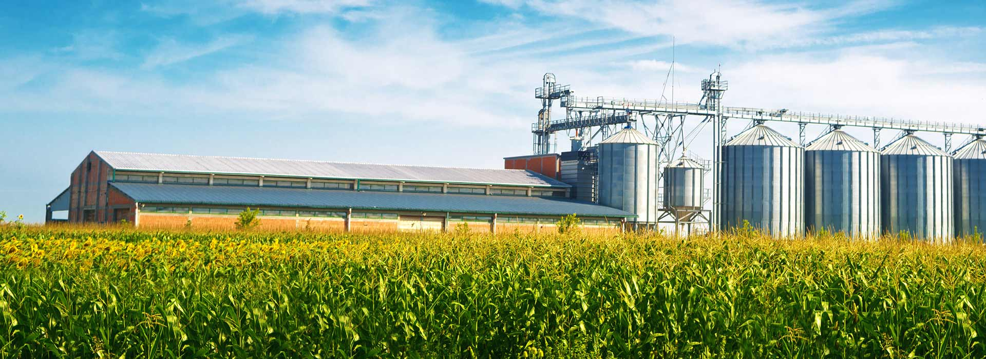 banner-grain-plant
