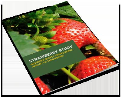 ebook-mockup-strawberry-study-v2.png