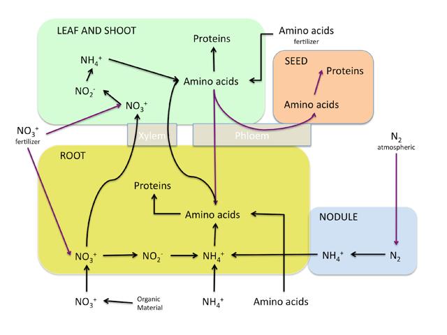 nitrogen-absorption-diagram-1.png