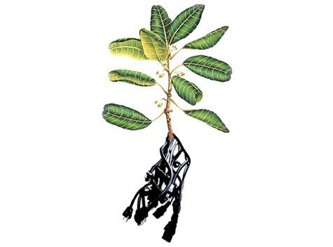 plants-electricty.jpg