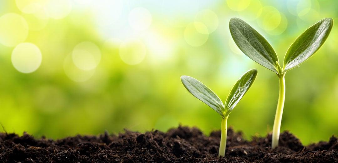 propagation-planting-1080x520